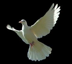 Love Like Jesus Holy Spirit and Love