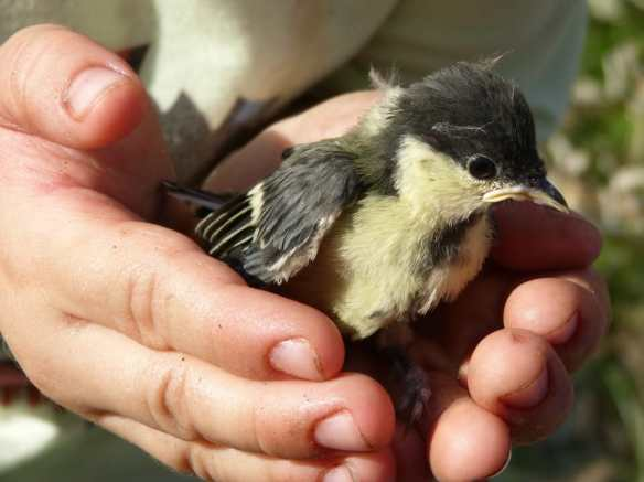 holding bird via peakpx - public domain